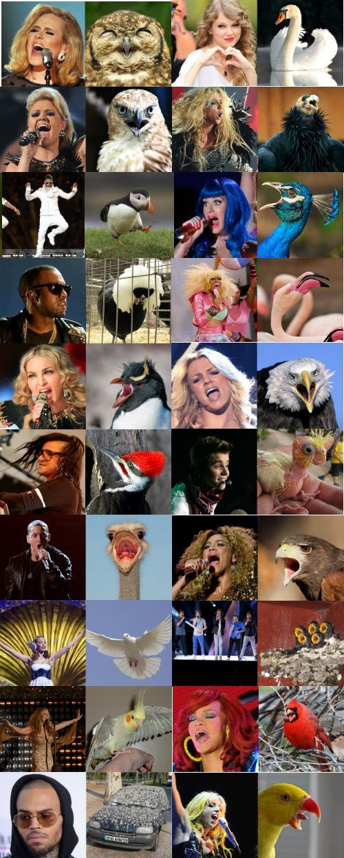 birds,pop stars,totally looks like,taylor swift,skrillex,katy perry,adele,kanye,Madonna,justin bieber
