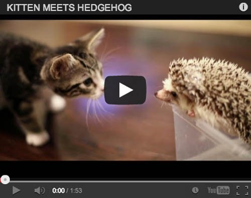 interspecies friends people pets hedgehog Cats Video - 7019997952