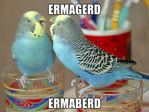 parakeets,mirror,birds,Ermahgerd,derp