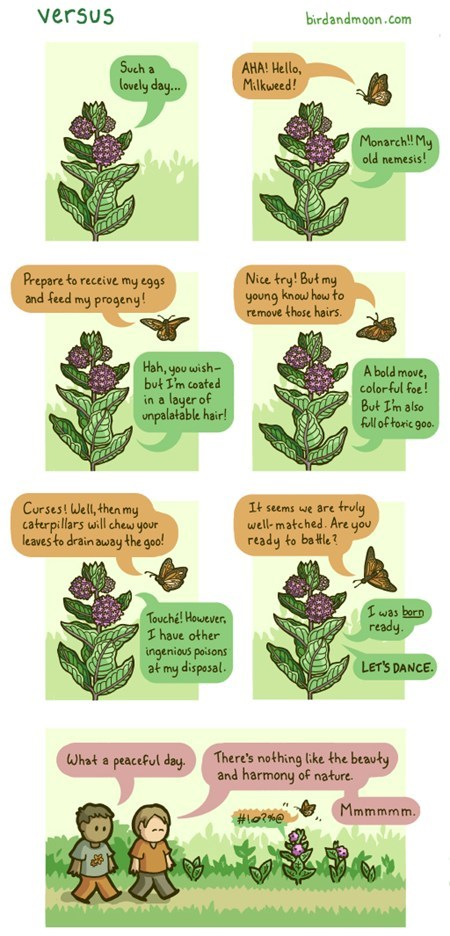 nature butterfly versus comic