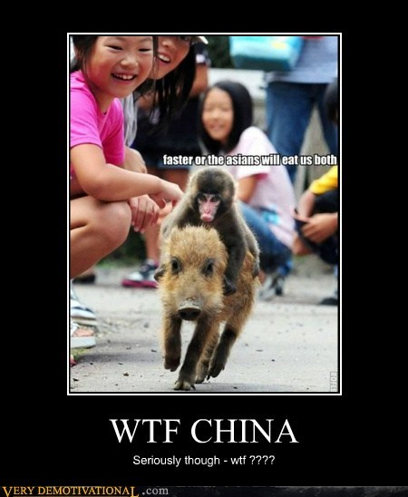 wtf China race pig monkey