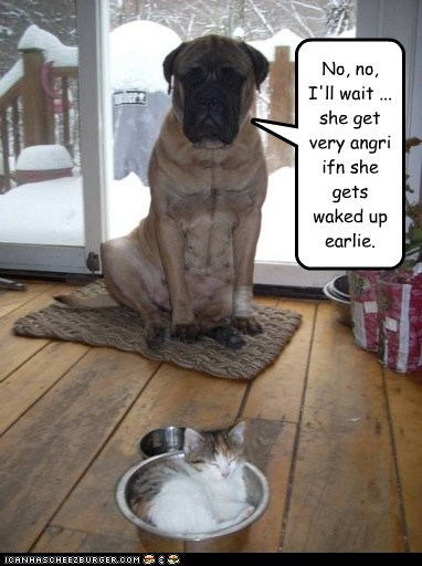 dogs,kitten,food bowl,Cats,sleeping,mastiffs