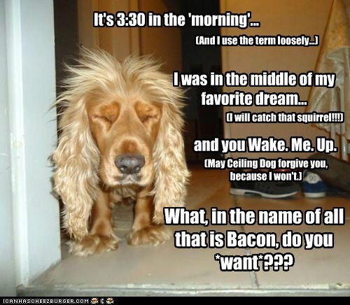 It's 3:30 in the 'morning'... What, in the name of all that is Bacon, do you *want*??? (And I use the term loosely...) I was in the middle of my favorite dream... and you Wake. Me. Up. (I will catch that squirrel!!!) (May Ceiling Dog forgive you, because I won't.)