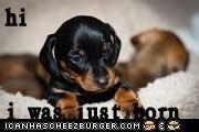 Cheezburger Image 7020962816
