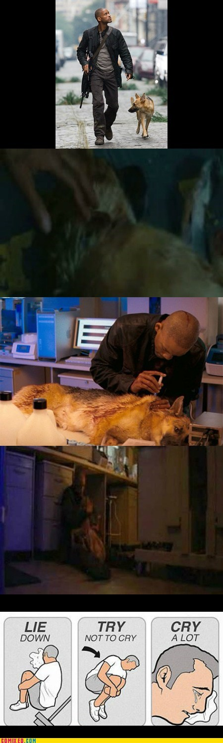 saddest i am legend dogs - 7021283584
