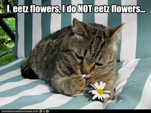 cat eat flowers food funny - 7021386496