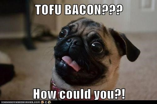 dogs tofu pugs betrayed derp bacon - 7021461760