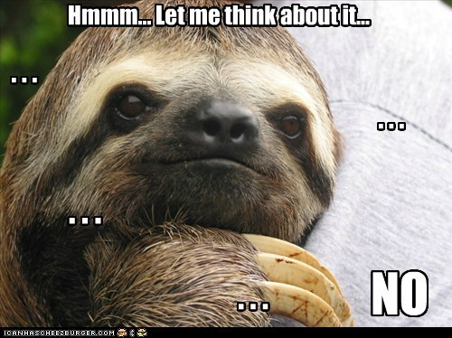 teasing,thinking,sloths,slow,no