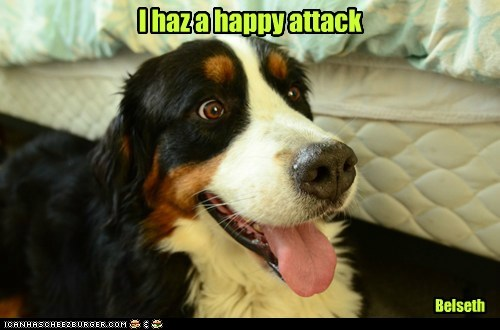 I haz a happy attack Belseth