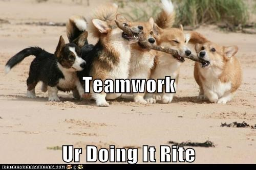 fetch stick dogs doing it right teamwork corgis - 7021770240