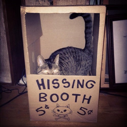 booth,scary,hiss,box,KISS,kissing booth,Cats,hissing