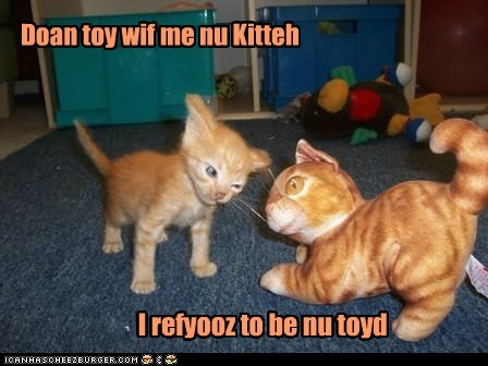 cat toy kitten kitty funny - 7022495744