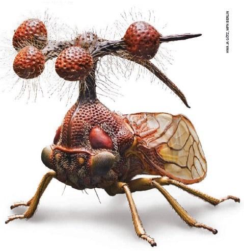 brazil tree hopper bug biology weird - 7022512896