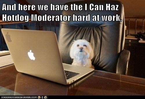 dogs moderator computer what breed laptop - 7022513408