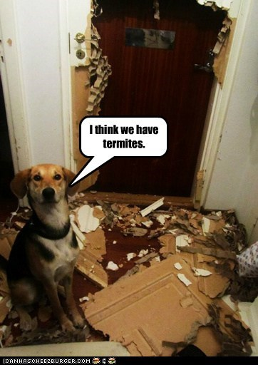 door,dogs,termites,in trouble,what breed,mess