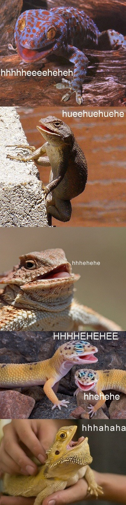 lizards wtf giggle laugh reptiles weird