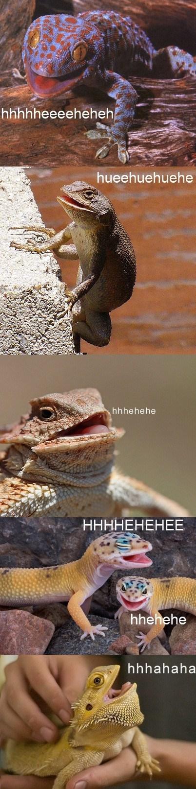 lizards wtf giggle laugh reptiles weird - 7022804224