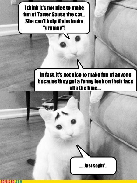 cat eyebrows Grumpy Cat - 7022808064