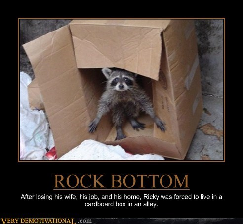 Sad raccoon homeless - 7022869248