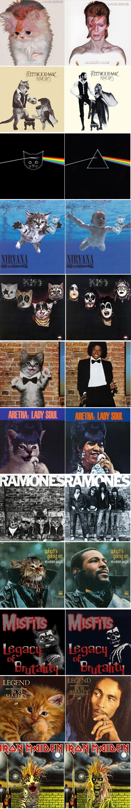 parodies,Cats,album covers,Music FAILS,g rated