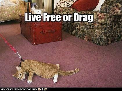 cat leash funny drag - 7023435264