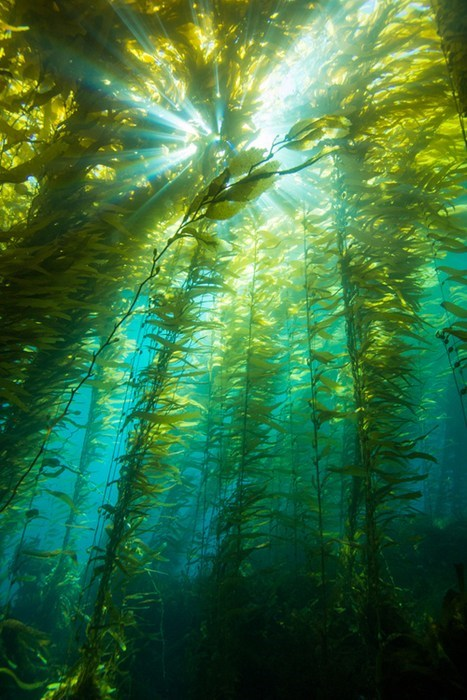 underwater scuba photography seaweed - 7023489280