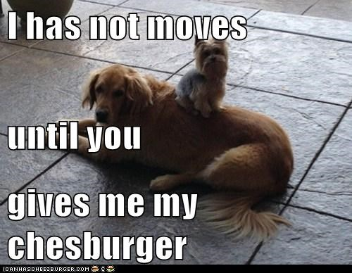 Cheezburger Image 7023577344