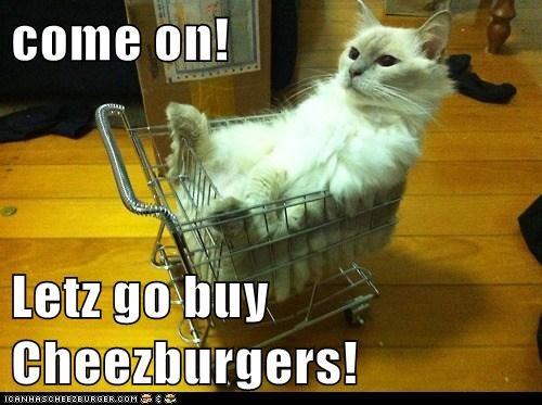 Cheezburger Image 7023609600