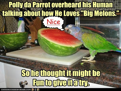 "Polly da Parrot overheard his Human talking about how He Loves ""Big Melons."" So he thought it might be Fun to give it a try. [ Nice"