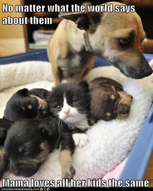 dogs kitten puppies adopted chihuahua - 7024244736