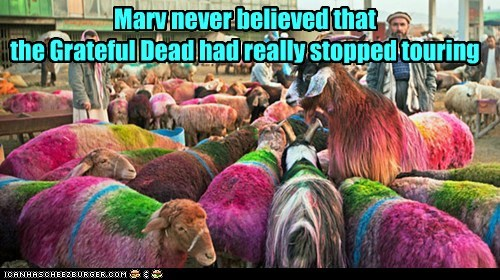 grateful dead,colors,touring,sheep,tie dye