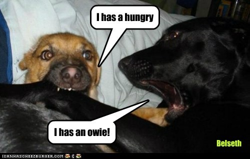I has a hungry I has an owie! Belseth