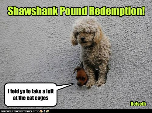 Shawshank Pound Redemption! Belseth I told ya to take a left at the cat cages