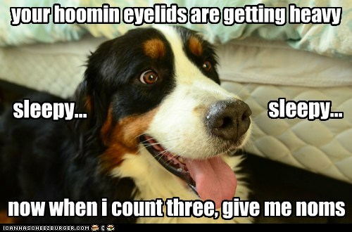 your hoomin eyelids are getting heavy sleepy... sleepy... now when i count three, give me noms