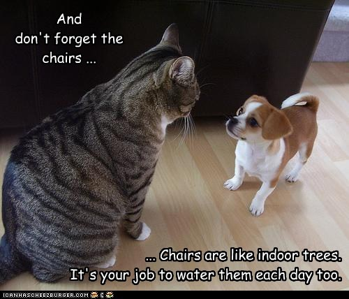 dogs puppies chairs peeing on things what breed Cats - 7024886272