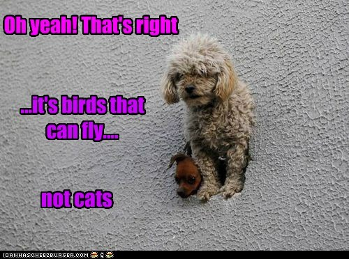 Oh yeah! That's right ...it's birds that can fly.... not cats