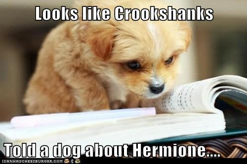 Looks like Crookshanks  Told a dog about Hermione....
