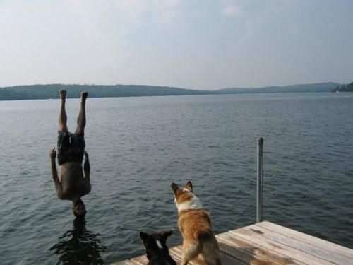 corgi upsidedown dogs - 7026390272
