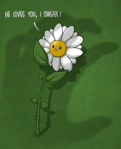 dont-hurt-me flowers she's loves me she loves me not - 7026553344