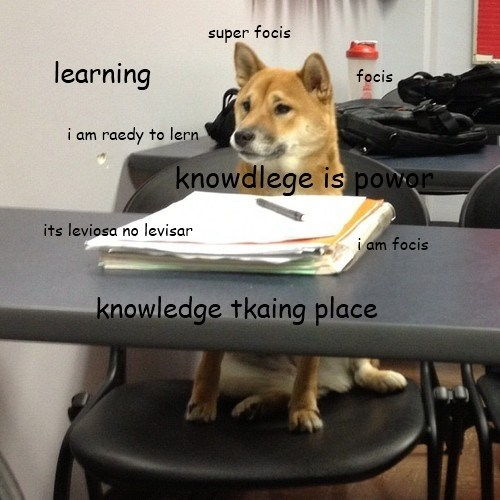 focus studying school Harry Potter test knowledge shiba inu - 7026558720