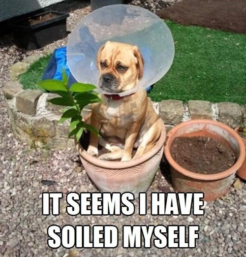 dogs,pun,soil,cone of shame,flower bed,what breed