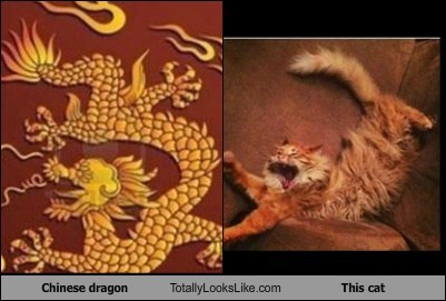 dragon,cat,gold-chinese,pose,TLL