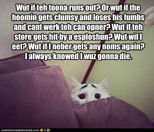 Worried Cat worries.