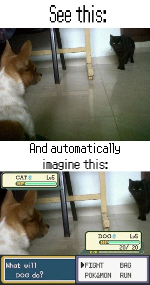 cat Battle dogs pets IRL animals - 7027056896