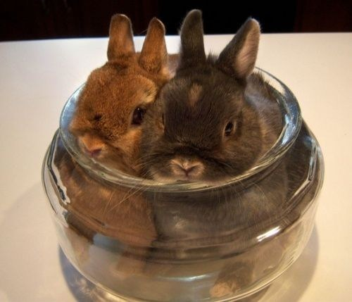 Bunday squished storage rabbit bunny dish squee
