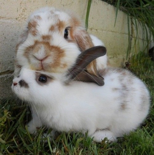 Bunday Fluffy friends lean on me rabbit bunny squee - 7027112192