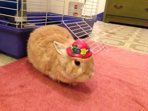 Bunday,fancy,flowers,rabbit,bunny,squee,hat