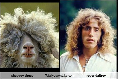 shagggy sheep Totally Looks Like roger daltrey