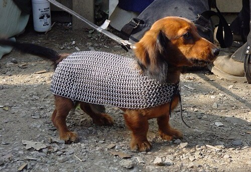chainmail,animal costumes,dogs