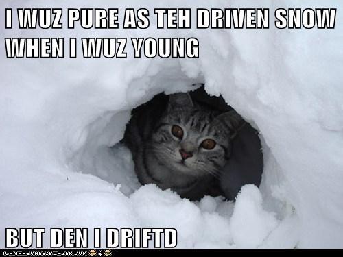 cat,snow,funny